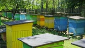 ecological : Handmade wooden beehives in the summer garden, Poland