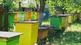 пчела : Natural and wooden beehives in sunny garden, Poland
