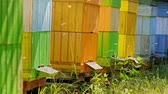 vespa : Ecological and nadmade beehives with bees in countryside, Poland Vídeos