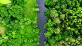 Old green forest and river, aerial view of Polandin summer, Tuchola national park Dostupné videozáznamy