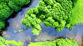 Beautiful old green forest and river in summer Poland, aerial view, Tuchola national park