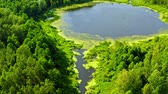 Small river and old green forest in Tuchola natural park from above, Poland in summer Dostupné videozáznamy