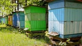 wosk : Beehives with bees in countryside, Poland in summer, Europe