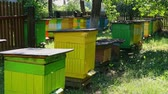 Handmade beehives in the summer garden, Poland, Europe Dostupné videozáznamy