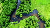 Top view of old green forest and river in Poland, aerial view, Tuchola national park