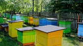 Beehives in sunny day in summer garden, Poland