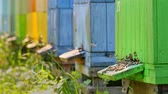 vespa : Closeup of colorful beehives in summer garden, Poland