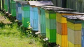 Colorful beehives with bees in countryside, Poland in summer