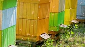 Colorful wooden beehives in summer garden, Poland Dostupné videozáznamy