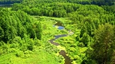 Green forest and river in Tuchola natural park, aerial view Dostupné videozáznamy