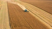 plodiny : Flying above blue harvester working on big field, Poland