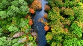 canoe : Top view of Kayaking on river in autumn forest Stock Footage