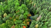 River and autumn forest in Poland, aerial view Stockvideo