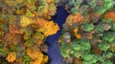 River and yellow autumn forest, aerial view