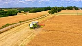 ziarno : Aerial view of harvester working on golden fields of wheat Wideo