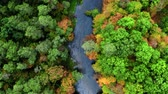 Blu river and autumn forest, aerial view Stockvideo