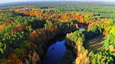 Colorful forest and river at sunrise in autumn, aerial view Stockvideo