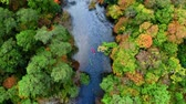 Top view of Kayaking on river by autumn forest