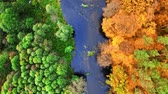 Top down view of river and colorful forest at autumn Stockvideo