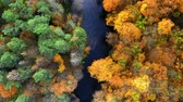 Top down view of river and yellow autumn forest Stock mozgókép
