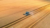 rozs : Harvester harvesting seed, aerial view in summer