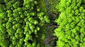 Aerial view of river, swamps and forest in summer, Poland Stock mozgókép