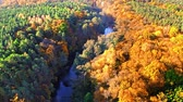 Green and yellow forest by river in autumn, aerial view Stock mozgókép