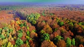 Aerial view of autumn forest in sunny day Stock mozgókép