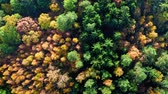 Colorful autumn forest in sunny day, aerial view Stock mozgókép