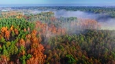 sun ray : Aerial view of foggy autumn forest at morning