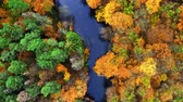 River and yellow autumn forest, view from above
