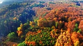 Autumn forest in sunny day, view from above