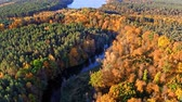 Yellow forest and river at sunrise, view from above Stock mozgókép