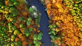Top down view of yellow forest and river in autumn