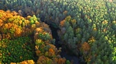 Yellow and green forest and river in autumn, aerial view Stock mozgókép