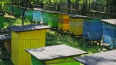 Few colorful beehives in sunny day in summer, Poland Stock mozgókép