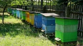 Few wooden beehives in the summer garden, Poland Stock mozgókép