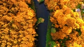 Top down view of yellow autumn forest and river