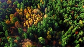 Colorful autumn forest at sunrise in Poland