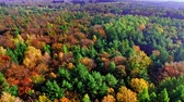 Aerial view of autumn forest in sunny day, Poland