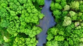 Top down view of green forest and river, aerial view