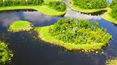 Lake and green forest in summer, aerial view