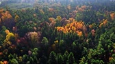 Top down view of forest in autumn, view from above Vidéos Libres De Droits