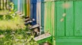 Closeup of wooden beehives in the summer garden, Poland