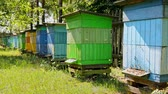 Closeup of beehives in sunny garden, Poland Stock Footage