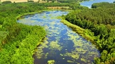 Green algae on the river and swamps in summer