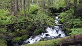 Waterfall in beautiful green rainforest along Herring Cove Trail near Sitka, Alaska