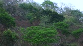 Mix of evergreen and seasonal barren trees in tropical forest during dry season in El Ocote Biosphere Reserve in Chiapas, Mexico, with natural sounds Vídeos