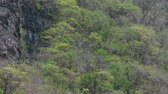 Telephoto tilt shot revealing tropical forest and steep vertical rocky cliff of Rio la Venta Canyon in Chiapas, Mexico