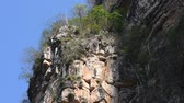 Telephoto shot of endemic plant species growing precariously on top of cliff of Rio la Venta Canyon in Chiapas, Mexico